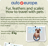 Infographic - Travelling with pets
