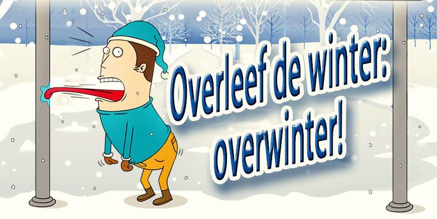 Infographic - Ontsnap aan de winter