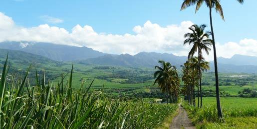 Autonoleggio a Réunion