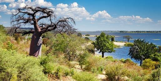 Biludlejning i Botswana