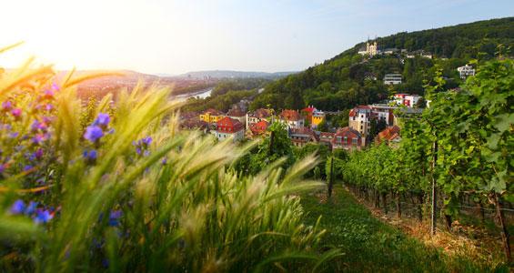 Wurzburg sett ovanifrån bland vinfälten med fortet Marienberg ovanför staden i bakgrunden på roadtrip i Tyskland längs med romantiska vägen