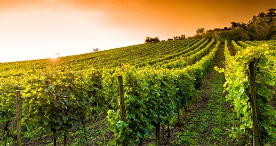 Tyskland roadtrip vinvägen