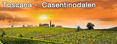 Solnedgång över gröna fält i Toscana