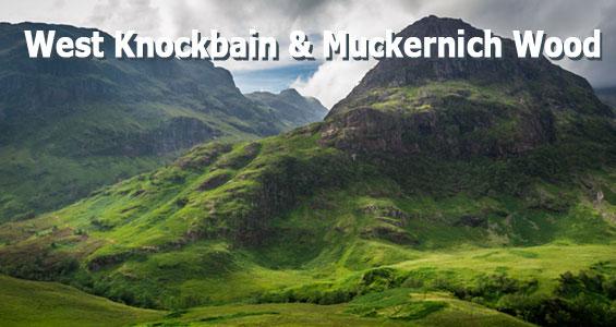 Автопутешествие по Шотландскому Нагорью West Knockbain Muckernich Wood Schottland