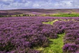 Road trip Yorkshire du Nord -  Kirkybymoorside