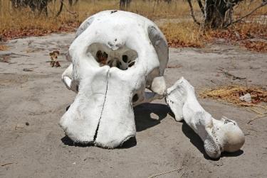 Road Trip Sicily - Elephant Skull